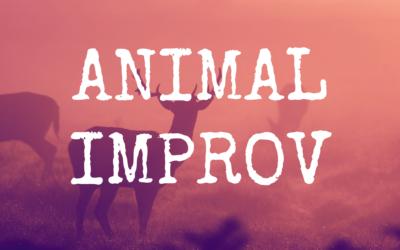 Animal Improv